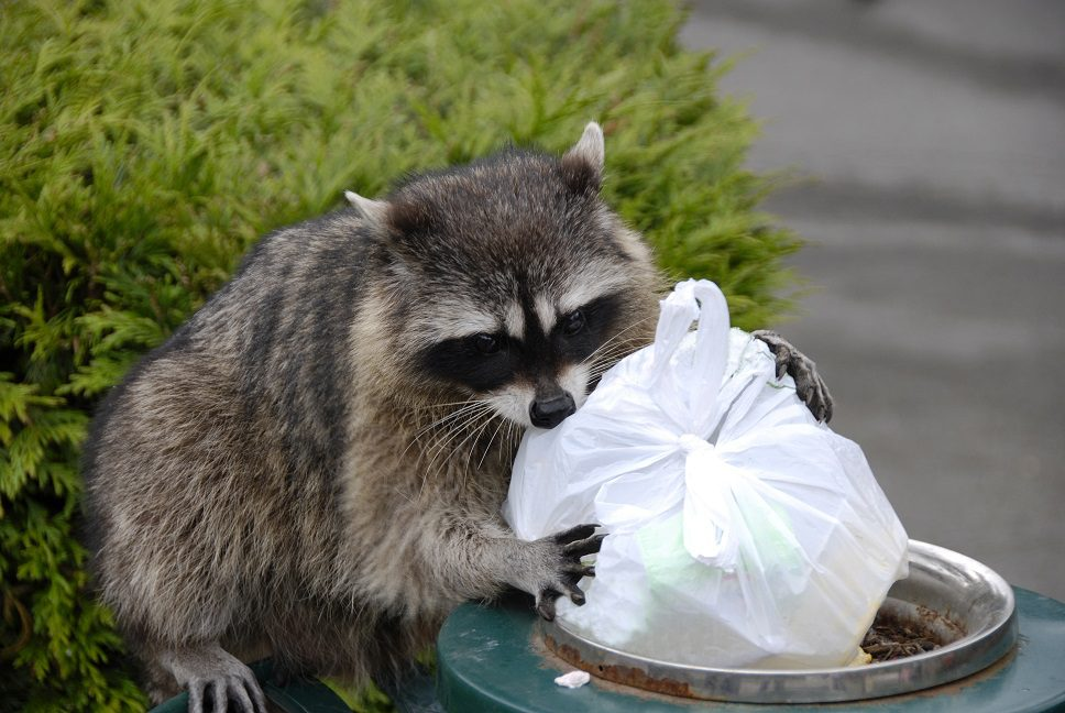 Keep Animals Out of the Trash | Residential Trash Monroe CT