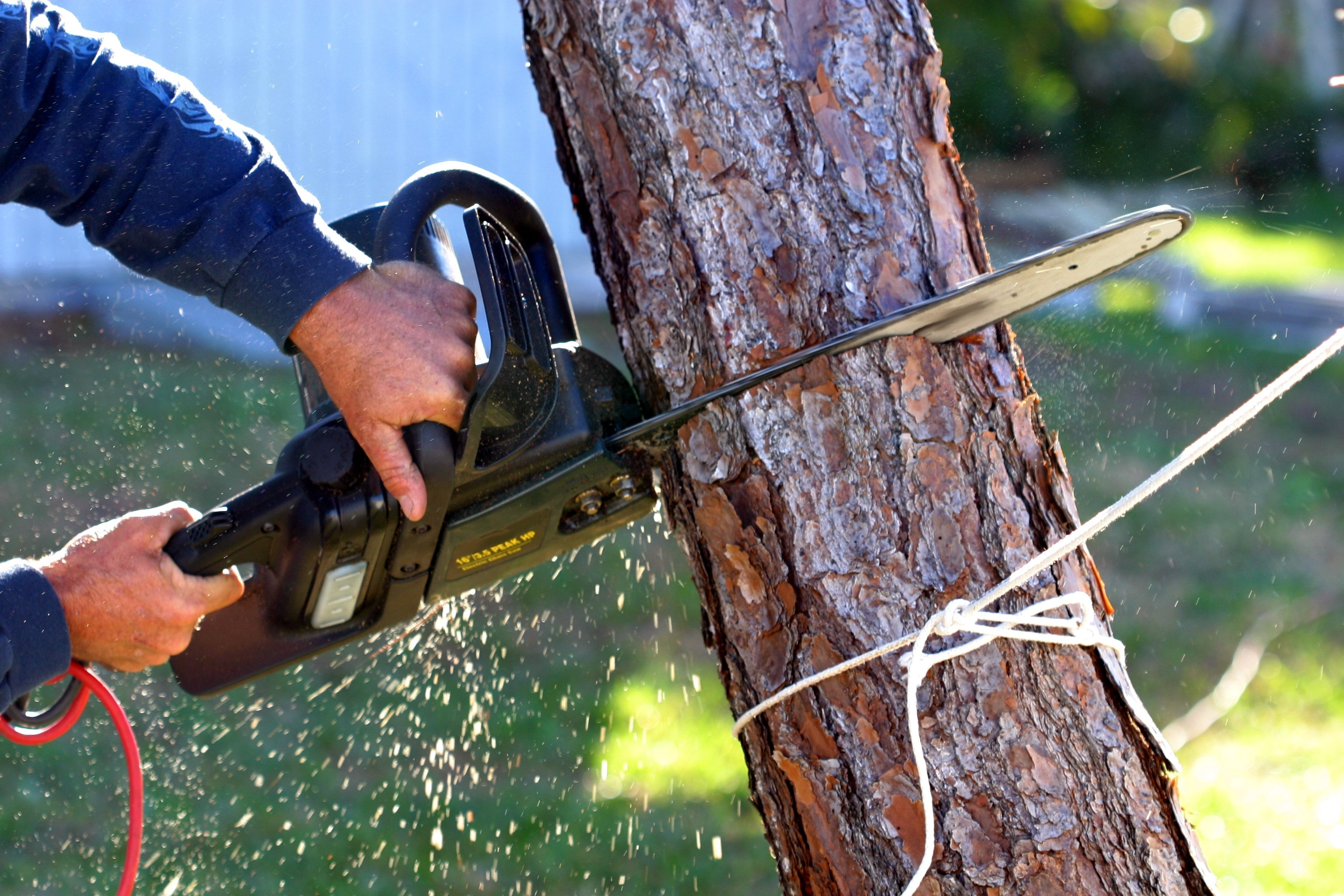 How To Remove A Dead Tree Residential Waste Systems